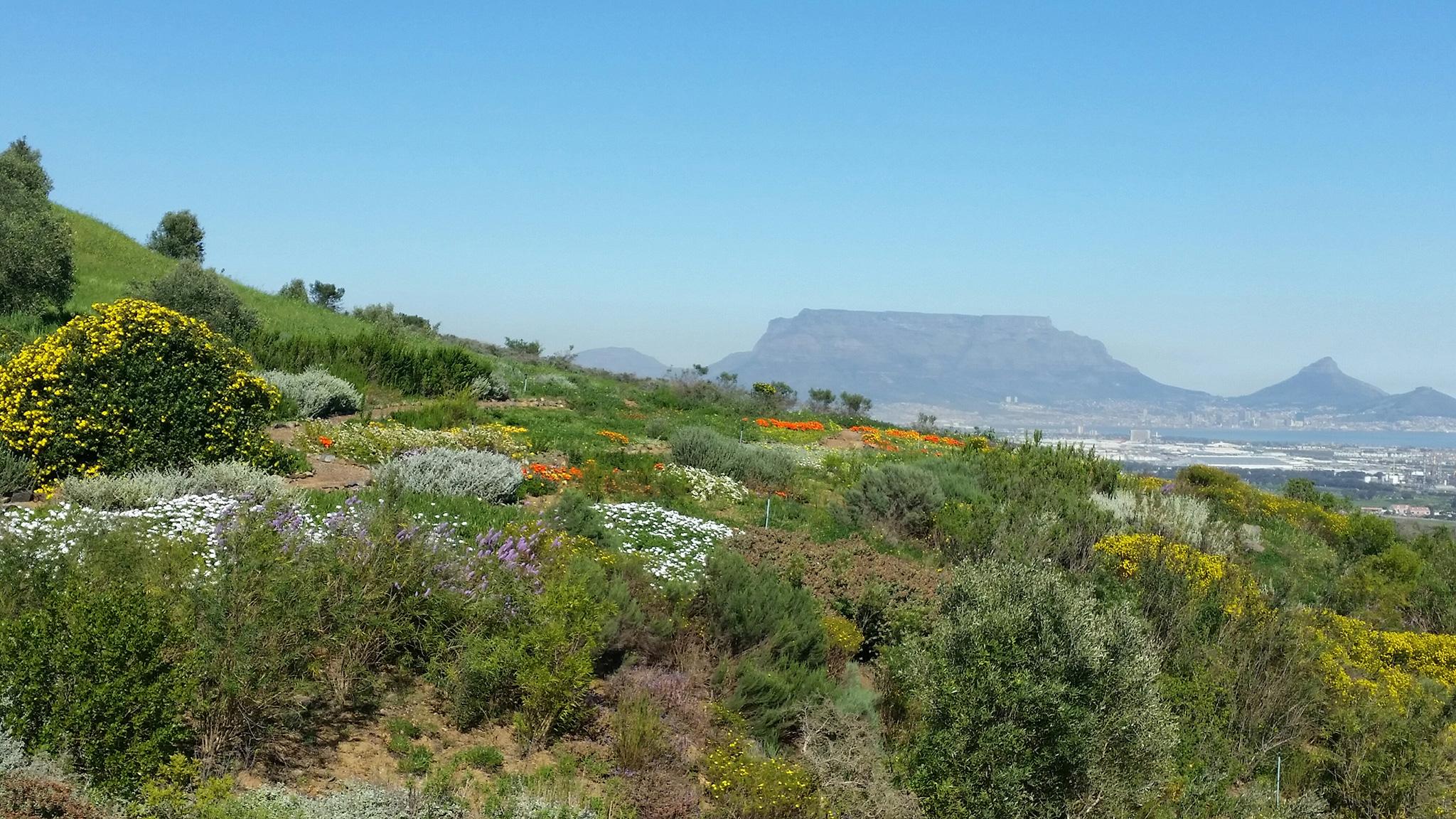 Table Mountain Cape Touwn Advisor