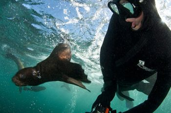 Animal Ocean Snorkelling - Scuba Diving in Cape Town