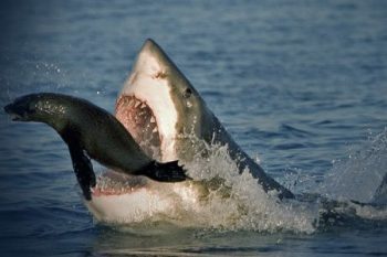 Apex Shark Experience - Activites in Cape Town