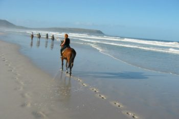 Cape Town Horse Riding - Horse Riding in Cape Town