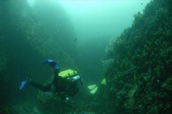 Dive Action - Scuba Diving in Cape Town
