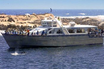 Drumbeat Charters - Activities in Cape Town
