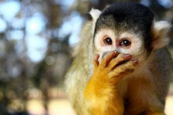 Monkey World - Activities in Cape Town