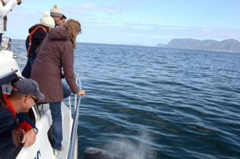 Simon's Town Boat Company - Activities in Cape Town