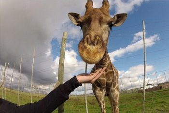 The Giraffe House - Wildlife Activities in Cape Town