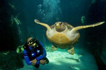 Two Oceans Aquarium - Aquariums in Cape Town