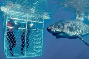 White Shark Diving Company - Shark Cage Diving in Cape town