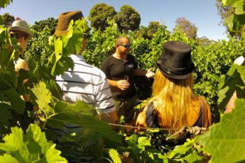 Wine Flies - Wine Tours in Cape Town